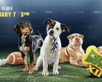 GDU Pups to play in the Puppy Bowl XII