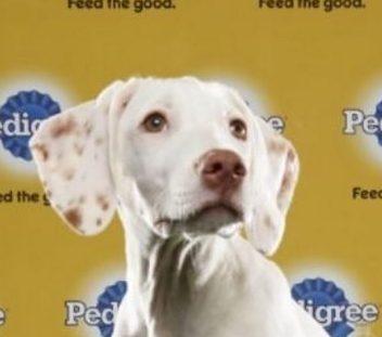Green Dog Rescue Troy Va