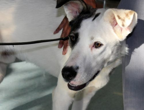 Deaf Dog Captain Jack To The Rescue