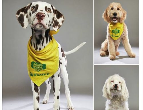 Green Dogs Unleashed Puppies Battle it Out in the Puppy Bowl