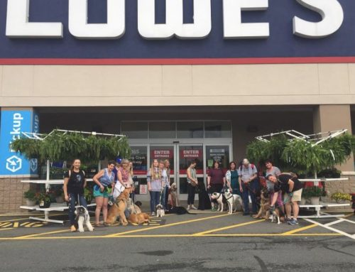 'Out and About' Therapy Dog Training